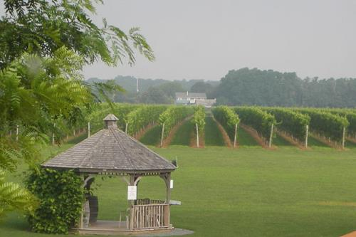 OSPREY'S DOMINION VINEYARD